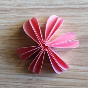 fiori con 6 petali