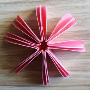 con 8 petali prima di aprire